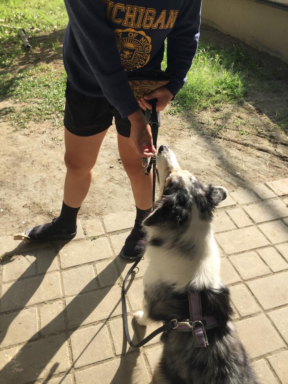 利用零食進行狗狗行為訓練
