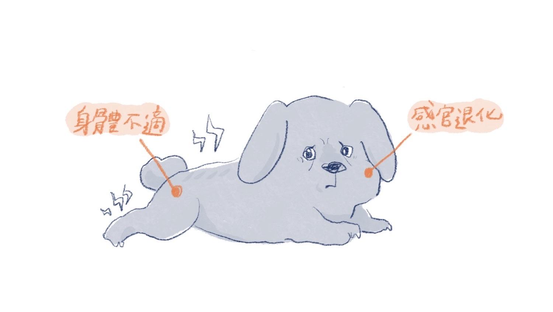 有攻擊性的老狗插圖