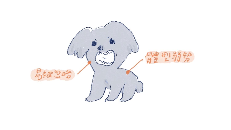 有攻擊性的小型犬插圖